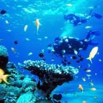 Bảo tồn sinh vật biển tại Vinpearl Bãi Dài Nha Trang