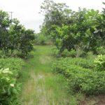 Đất trồng cây hàng năm khác là gì? Có nên mua loại đất này không?