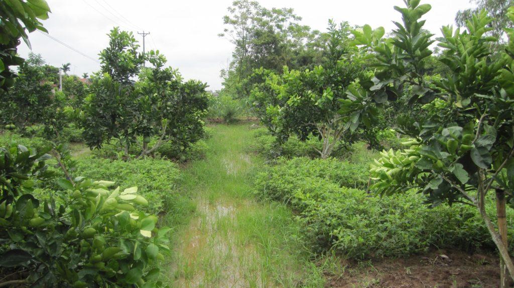 Đất trồng cây hàng năm khác là gì?